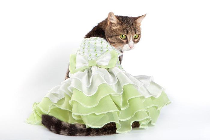 59669367 ドレスを着た猫
