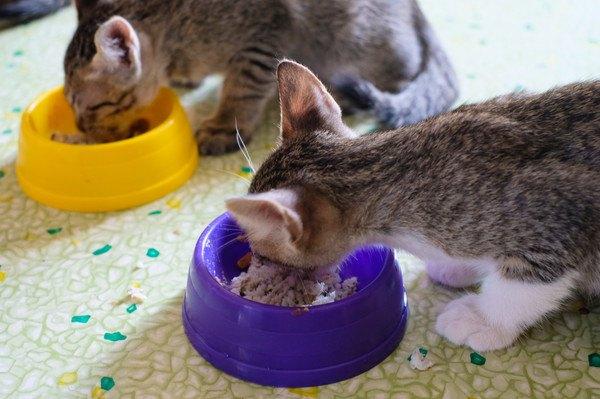 ご飯を食べる2匹の猫