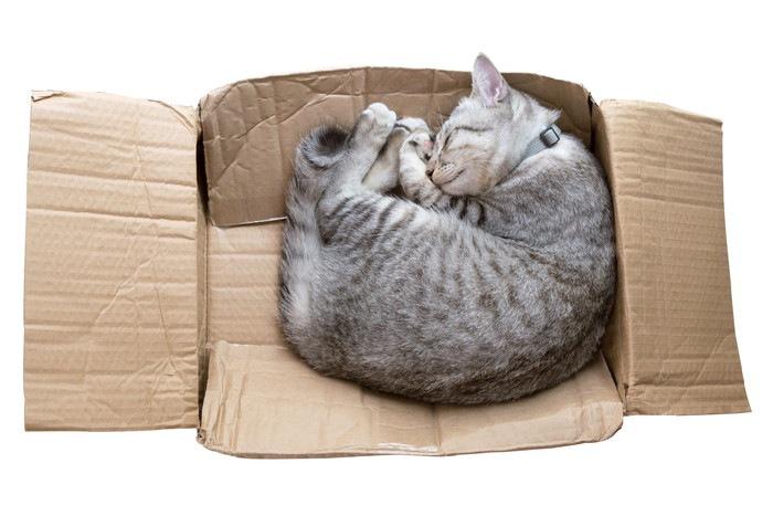 段ボールで眠る猫の写真