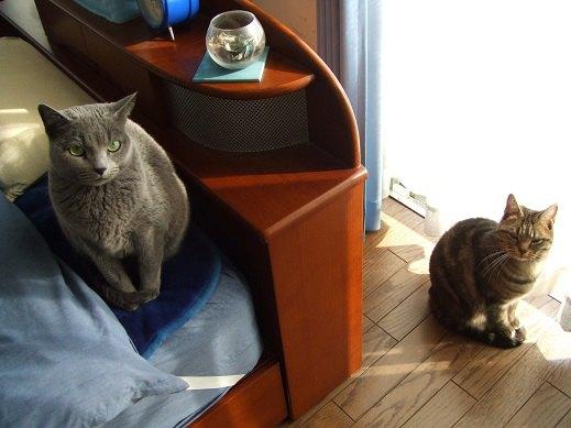 窓際とベッドの上に乗っているネコ達
