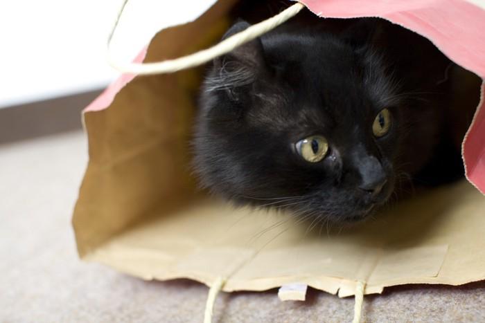 紙袋にはいる黒猫