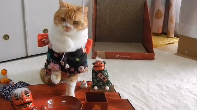 目の前に吊るされた食べ物を狙う猫