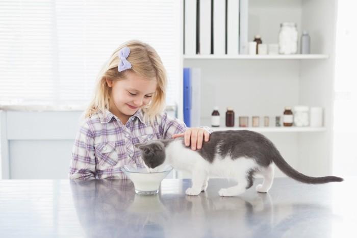 ミルクを飲んでいる猫