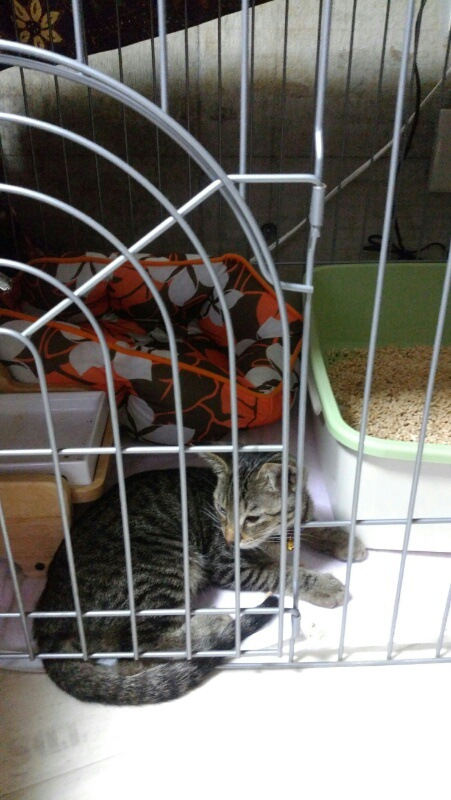サークル内の猫