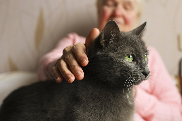 おばあちゃんに撫でられている黒猫