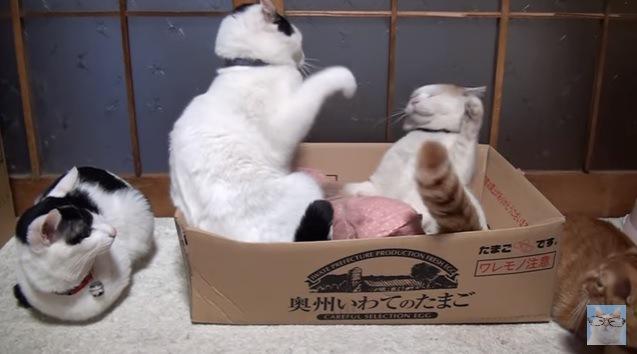 パンチする猫と香箱座りの左端の猫