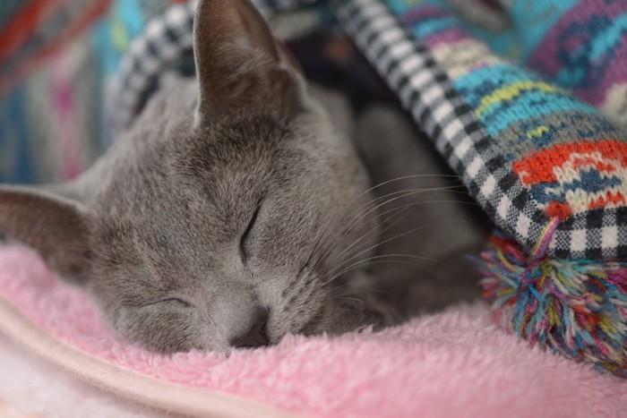 毛布の中で眠るグレーの猫