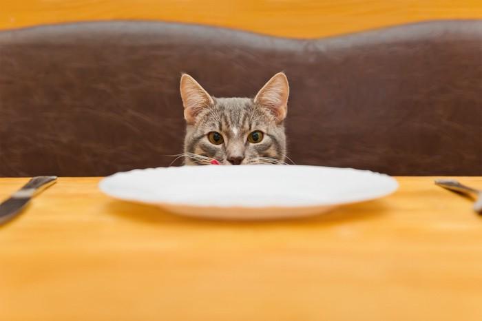 テーブルの上のお皿を見つめる猫
