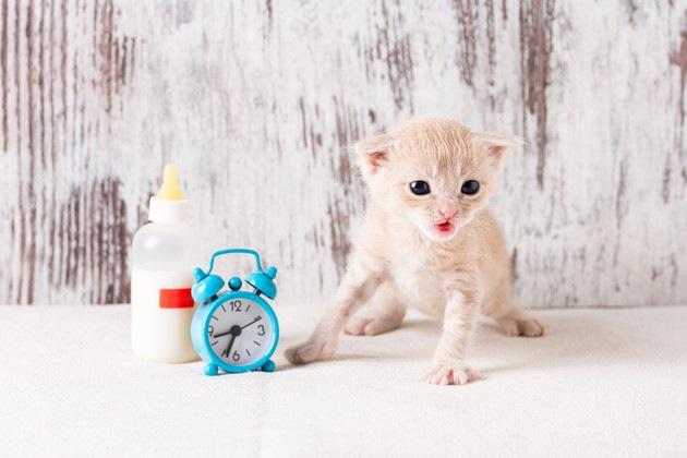 子猫とミルクと時計
