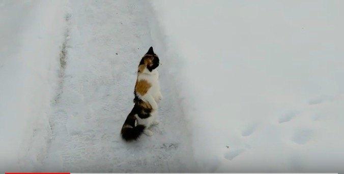 真っ直ぐ見る猫