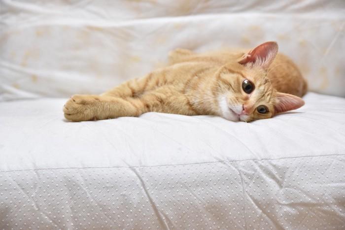 つまらなそうに横になる猫