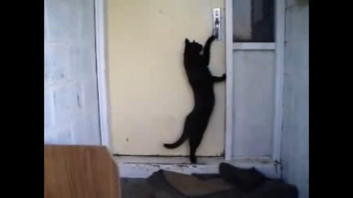 再びノックする猫
