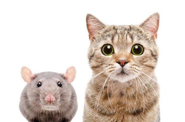 アニメ的な猫とネズミ