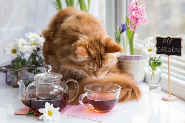 お茶を嗅ぐ猫