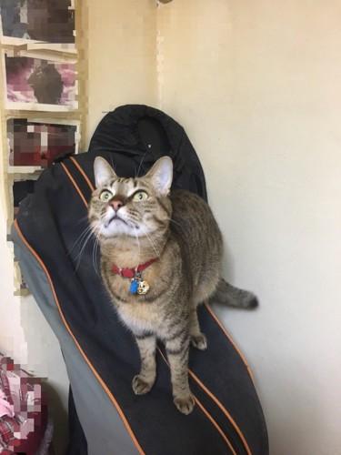 上を向く猫