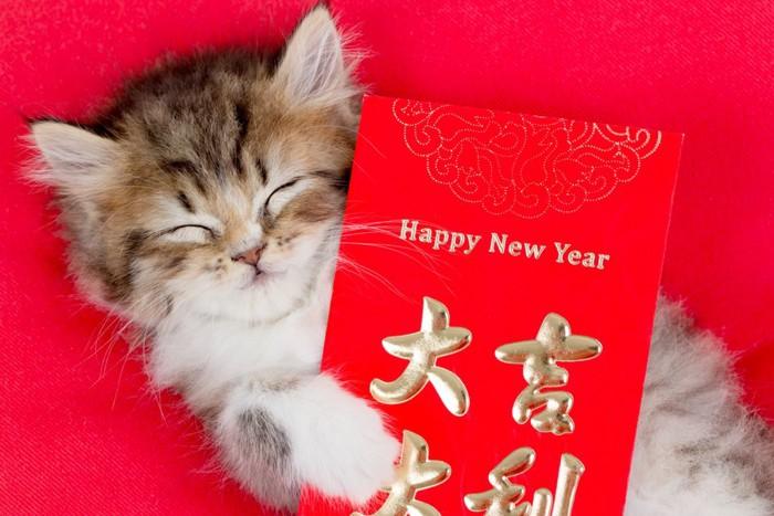 旧正月カードを持つ猫