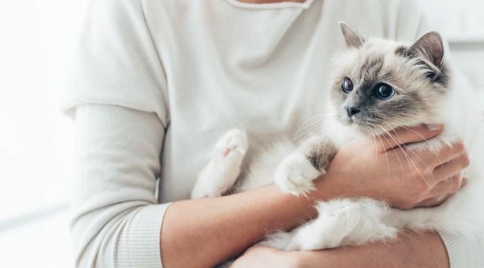猫を抱く人