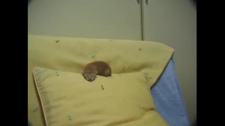 ソファで眠る猫