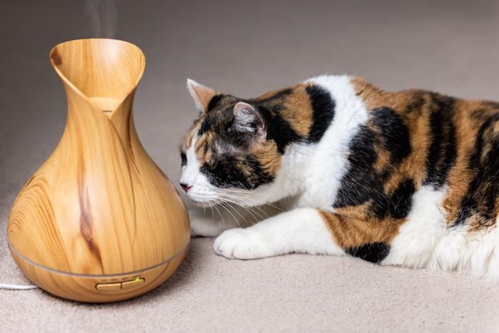 アロマオイルの匂いを嗅ぐ三毛猫