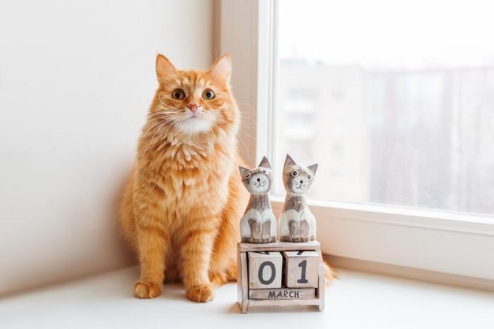 カレンダーとオレンジの長毛猫