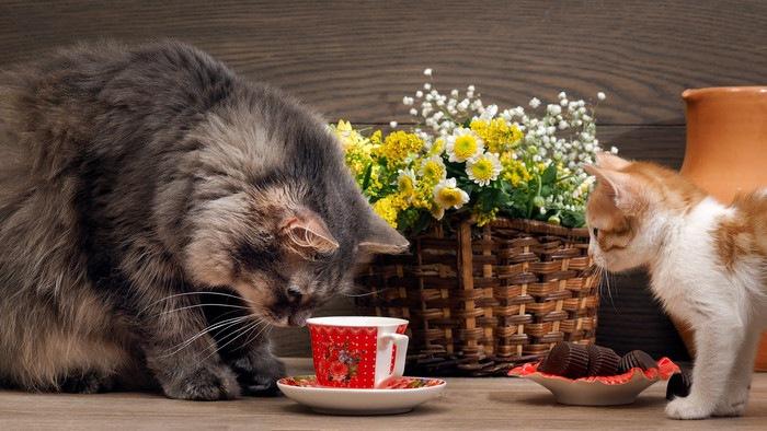 茶白子猫と成猫