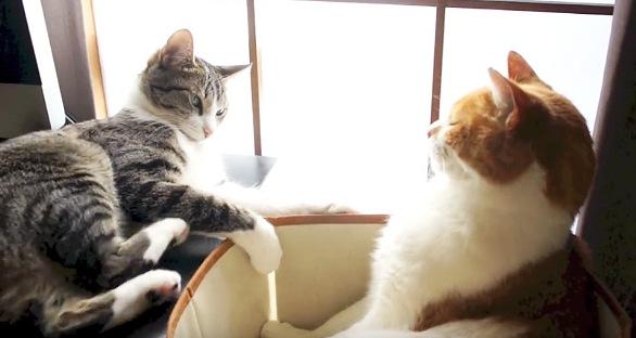 後ろ足でキックする猫