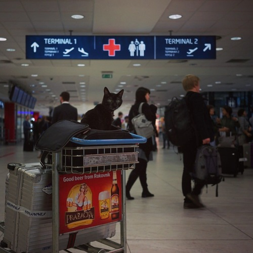 空港にいるノロ
