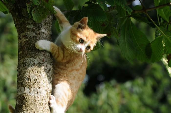 木に登る子猫