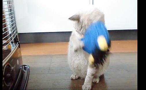 被り物を前足で脱ぐ猫