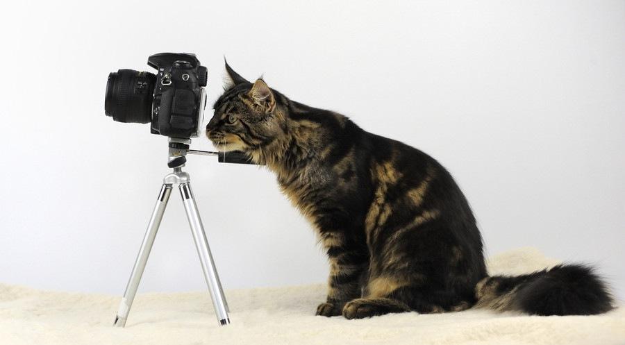 カメラをのぞき込む猫