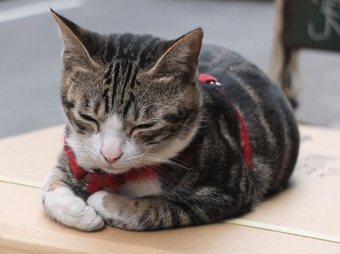 箱座りする猫