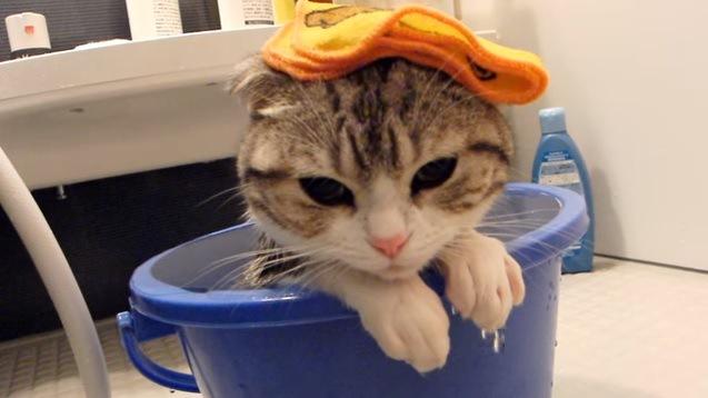 バケツ風呂に浸かる猫(顔アップ)