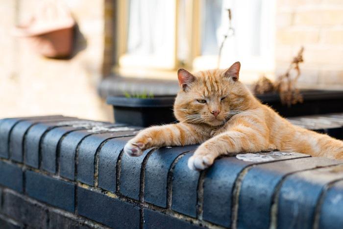 屋外で寛ぐ猫の写真