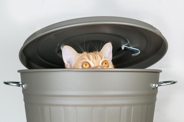 ゴミ箱からのぞく猫