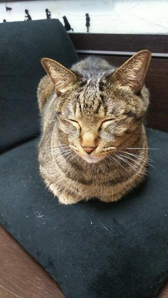 猫のアップ