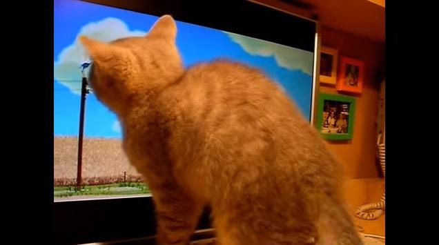 画面に顔を近付ける猫