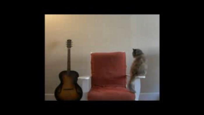 椅子に近寄る猫