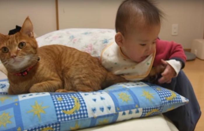 しっぽで遊ぶ赤ちゃんと猫