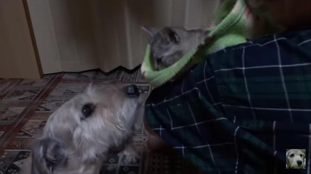 子猫を見つめる犬