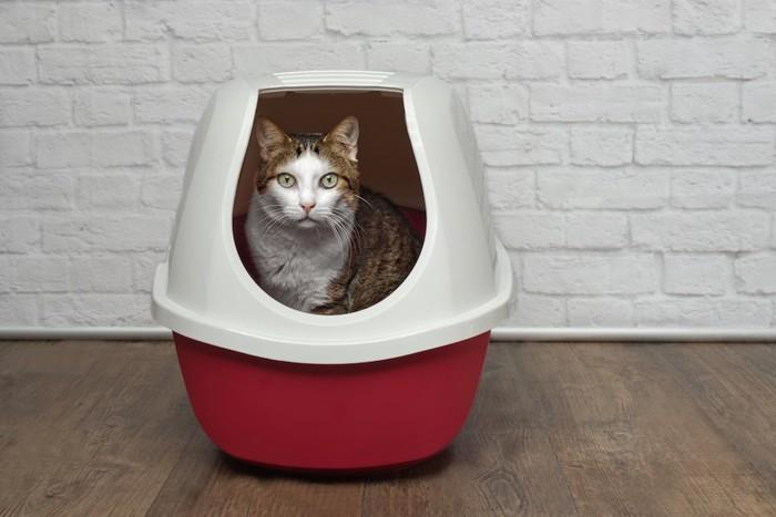 猫砂の飛び散り対策のトイレに入る猫