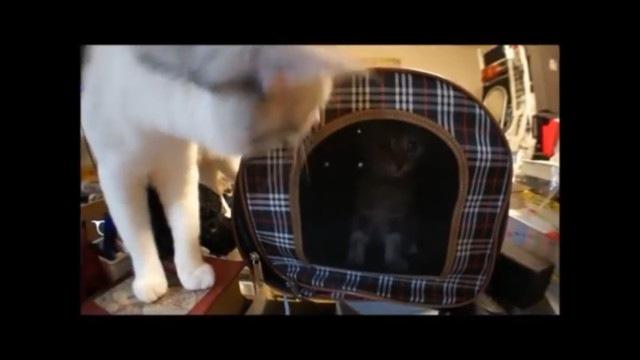 威嚇をやめる子猫