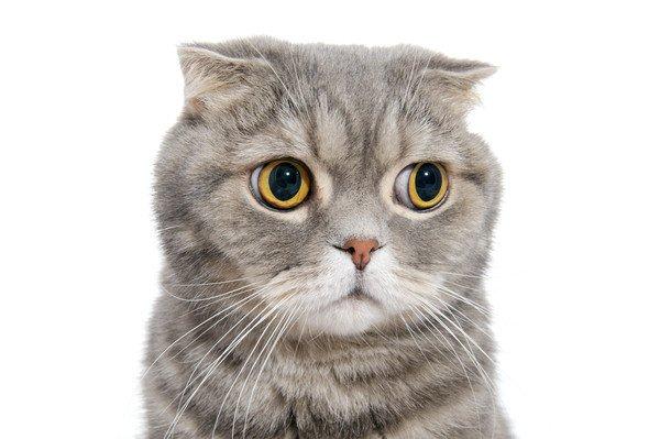 気まずそうな猫