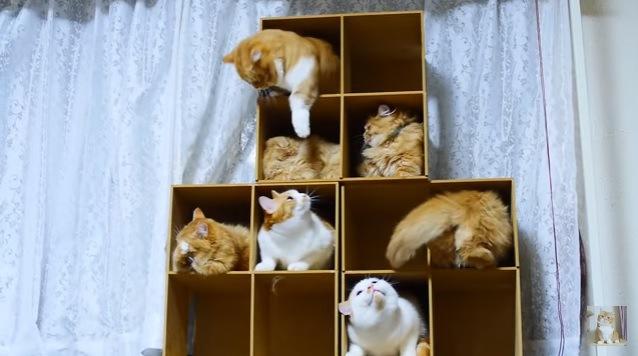 箱に入る猫たち(下の階の猫を叩く猫)