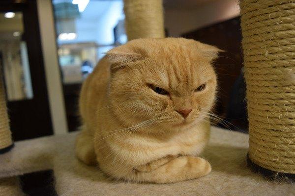 不機嫌な茶色い猫