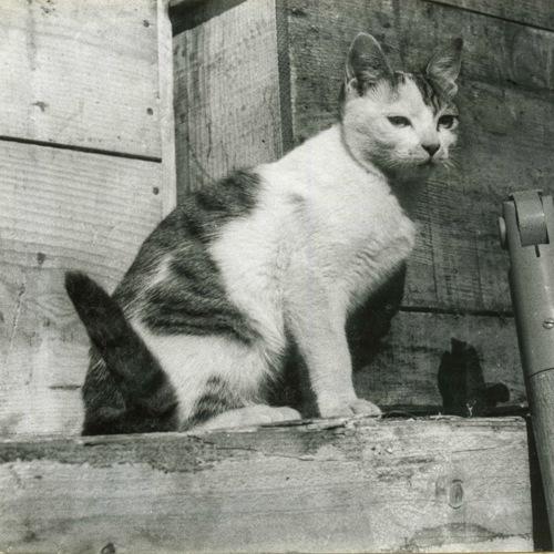 三毛猫タケシ