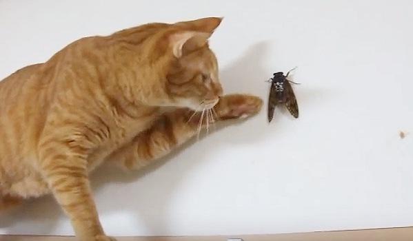 蝉にそっと触ってみようとする猫