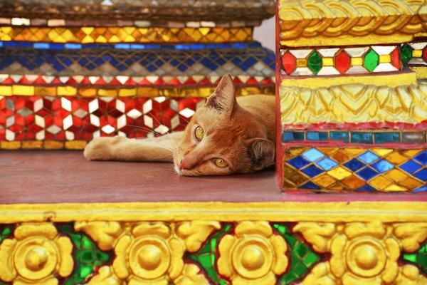 寺社の前の猫