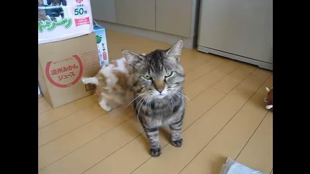 カメラ目線の猫