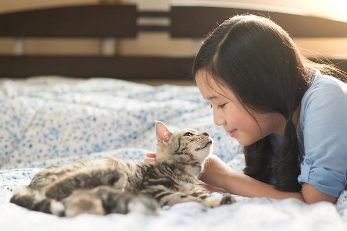 女の子と見つめ合うアメリカンショートヘアの子猫