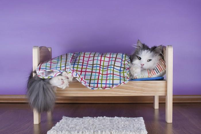 猫用のベッドでブランケットをかけて眠る猫